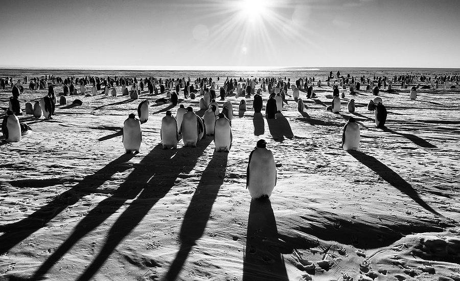 12 Days Emperor Penguins & A Solar Eclipse