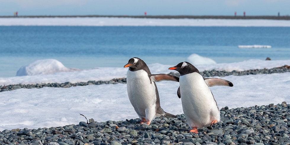 18 Nights Antarctica & Falklands Expedition