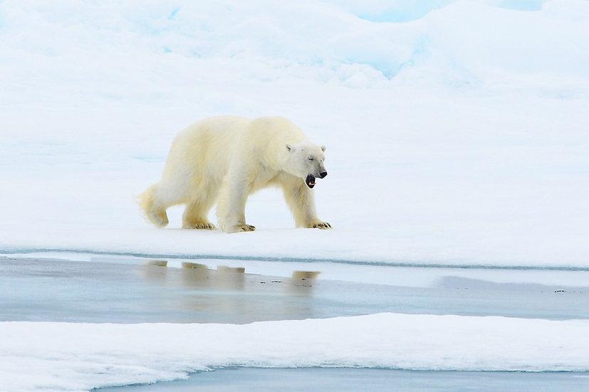 9 Nights Around Spitsbergen