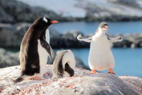 10 Nights Discovering Antarctica from Punta Arenas