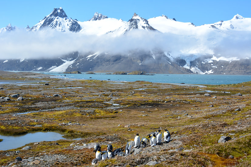 20 Nights Antarctica, South Georgia and Falklands Explorer
