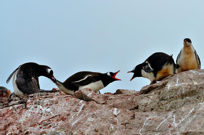 Valentine's Day 9 Nights Antarctica Discovery