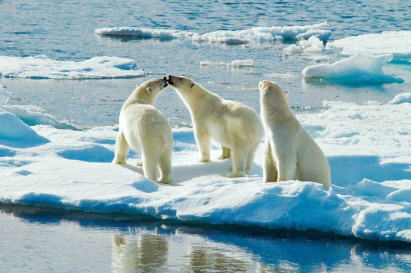10 Nights Land of the Ice Bears