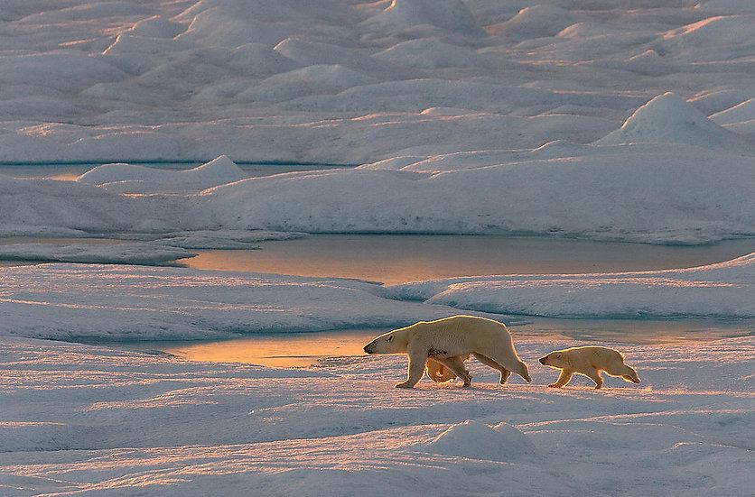 24 Nights The Northwest Passage