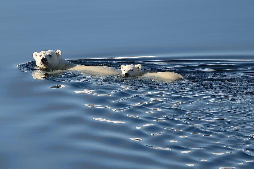 12 Nights The Russian Arctic: Between Wrangel & Chukotka
