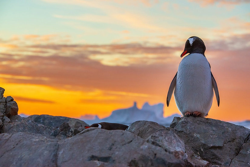 19 Nights Falklands, South Georgia and Antarctica Wildlife Expedition