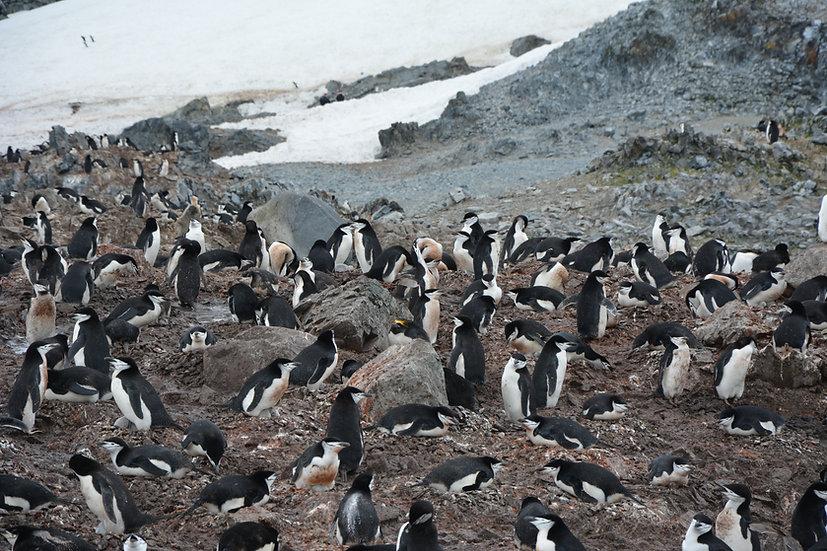 10 Nights Antarctica Classic