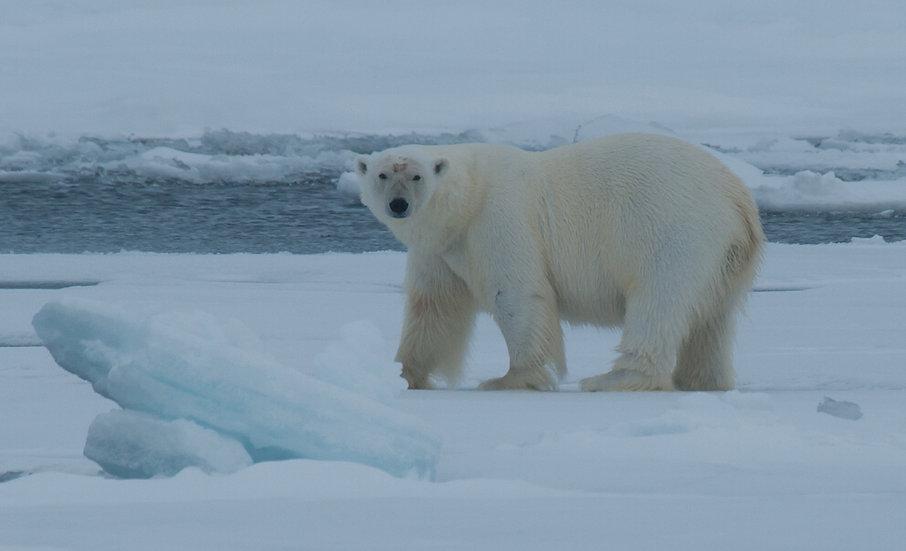 7 Nigths North Spitsbergen, Arctic Spring
