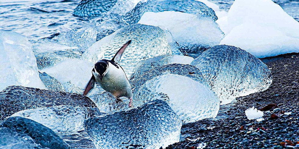 11 Nights the Frozen Land of the Penguins