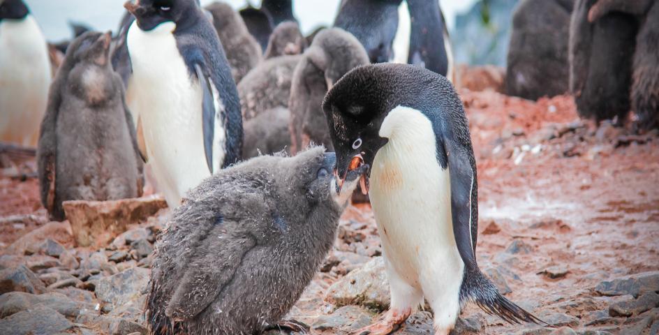 7/8 Nights Antarctic Express: Fly the Drake