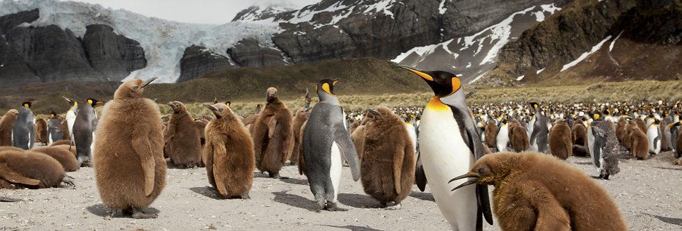 18 Nights Antarctica Peninsula, Falkland and South Georgia Expedition