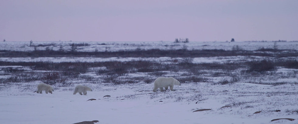 6 Days Churchill Town and Tundra Enthusiast (Land)
