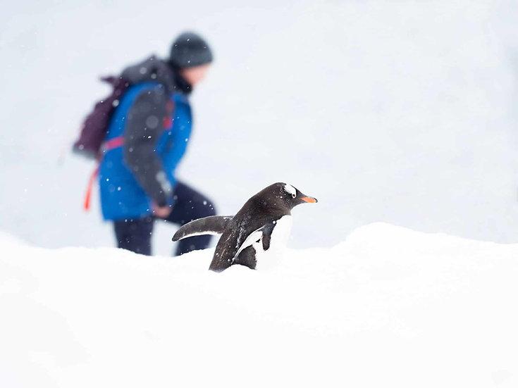 11 Nights Wild Antarctica