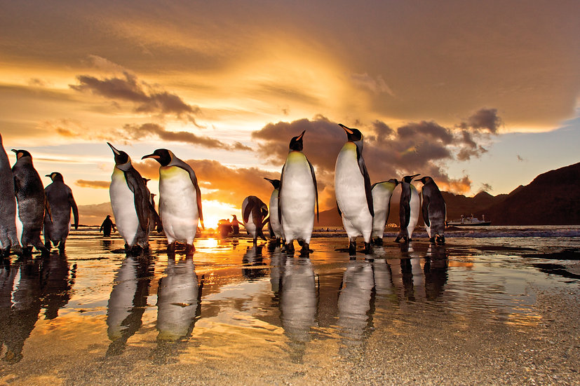 23 Nights Antarctica, South Georgia and the Falklands Expedition