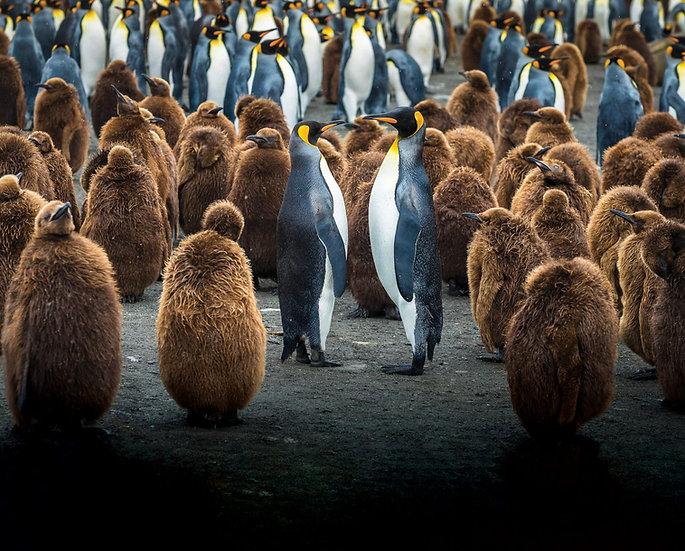 24 Nights Falkland, South Georgia & Antarctic Odyssey with South Sandwich Island
