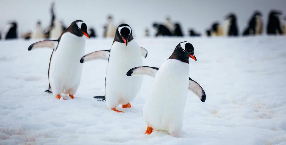 12 Nights Antarctic Explorer with Cape Horn & Diego Ramirez