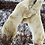 Thumbnail: 6 Days Churchill Town and Tundra Enthusiast (Land)