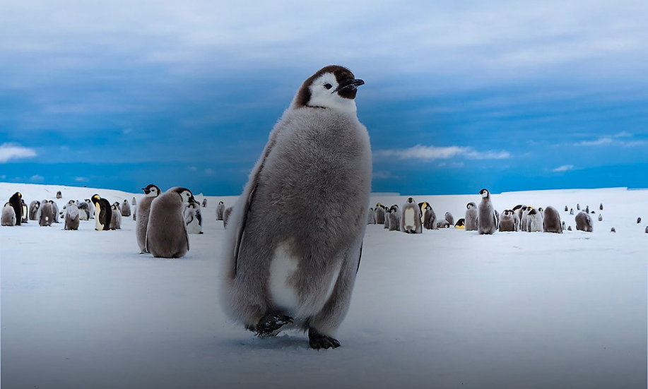 8 Days Emperors and South Pole