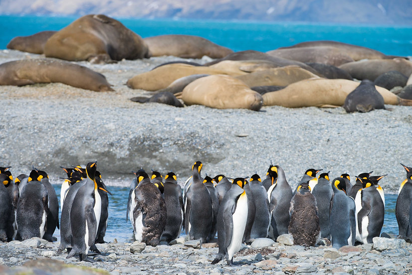 21 Nights Falklands, South Georgia and Antarctica