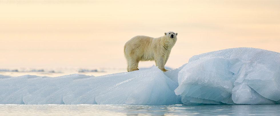 14 Nights High Arctic Explorer
