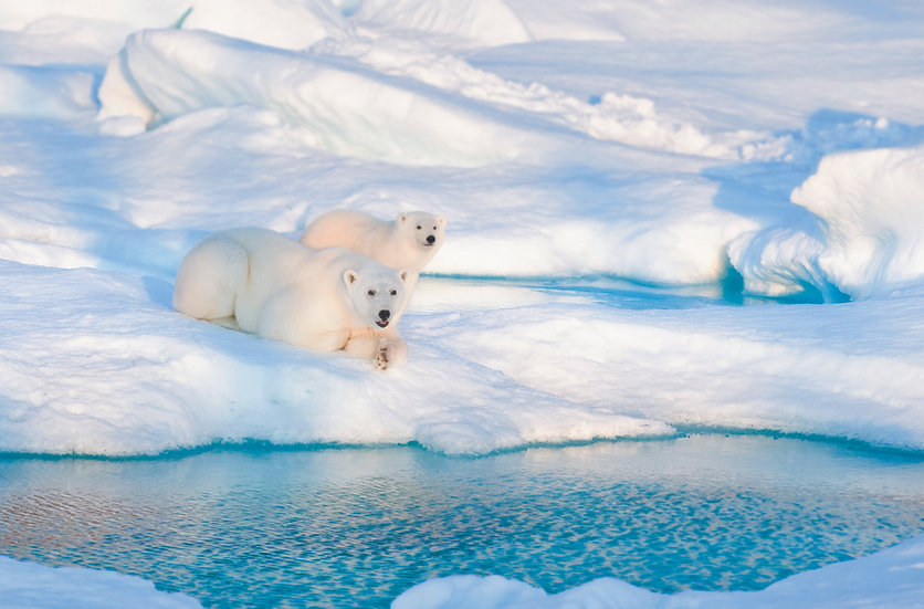 11 Nights High Arctic Explorer