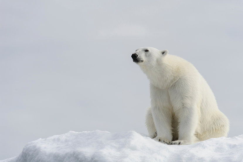 13 Nights Iceland, Jan Mayen & Svalbard Expedition