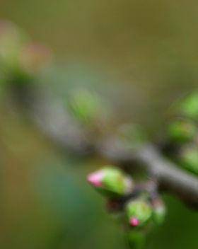Haar en huid in april, De holistischeharenkalender