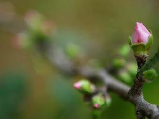 4 Caregiving Tips for Spring