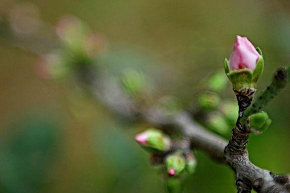 Zacht lenteweer op komst