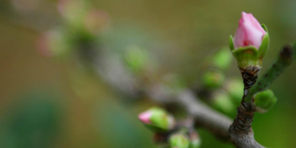 Spring Vitality Workshop