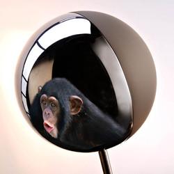 Chrome Monkey