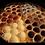 Thumbnail: Rolled Truffles