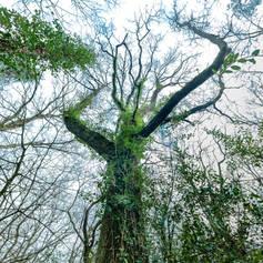 La Forêt des Invisibles