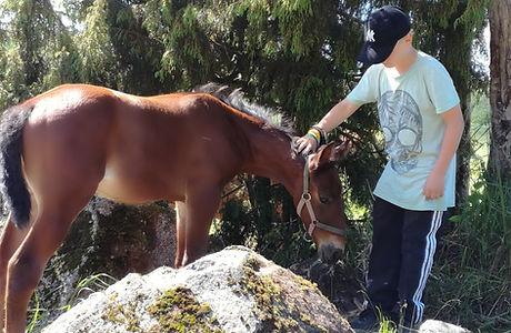 Yhteys hevoseen