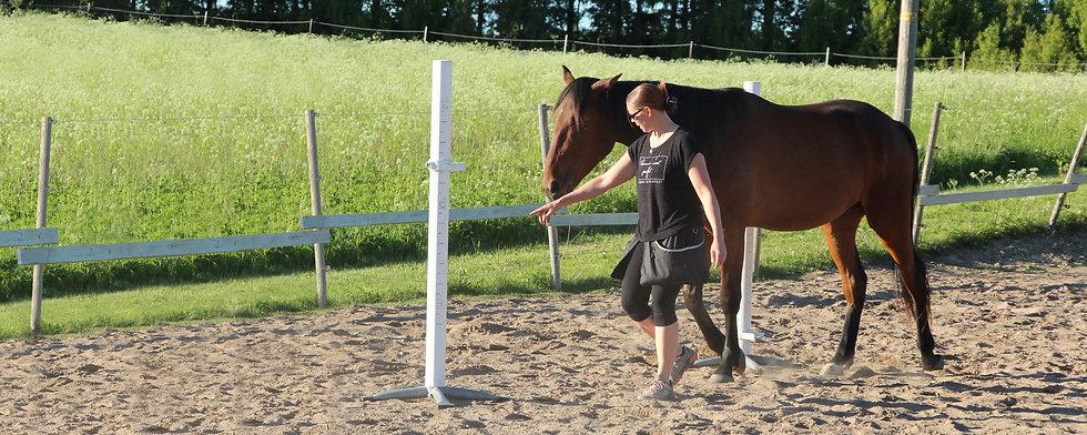 Hevosten koulutus