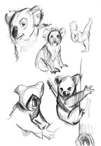 Assassin Koala's