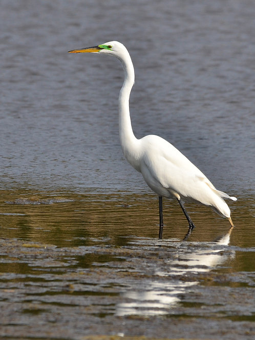 Great Egret Servitor