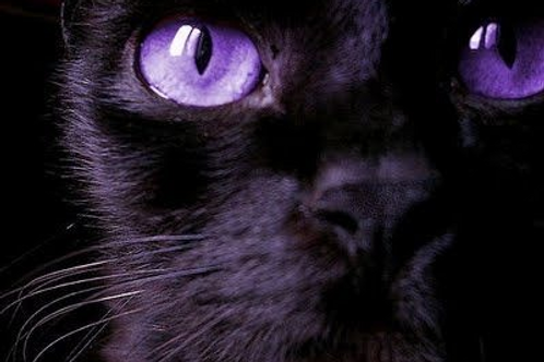 Merbaille, Male Fae Cat