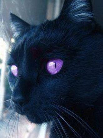 Olivandre, Male Fae Cat