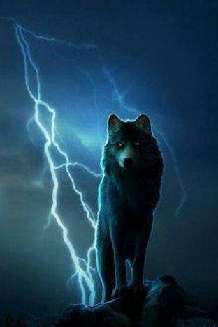 Okora, Male Storm Wolf