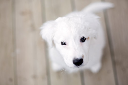 Heaven Pup Adoption