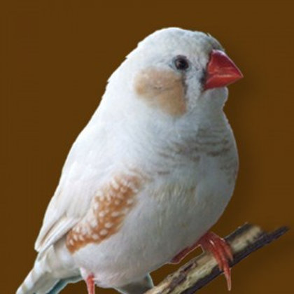 White Finch Servitor