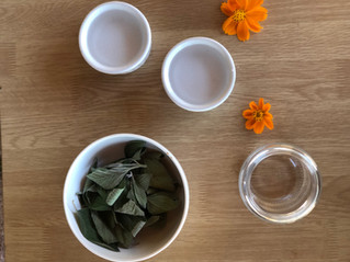 Como fazer extrato glicerinado de melissa (Lippia Alba)
