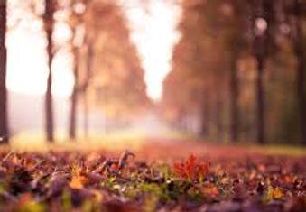 Chemin d'automne.jpg