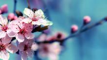 Le printemps dans l'âme | Méditation de l'équinoxe vernal