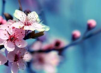 Le printemps dans l'âme   Méditation de l'équinoxe vernal