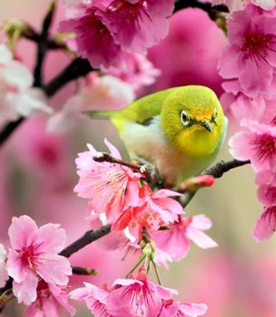 Équinoxe printemps