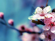 Equinoxe printemps