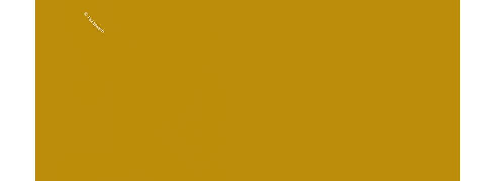 HTV Logo Gold.png