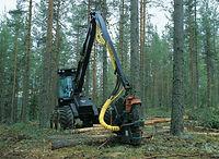 forestry_1920w-768x561.jpg